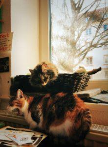 Eine Katze im Körbchen, eine Katze auf der Heizung. Eine guckt, die andere gähnt.